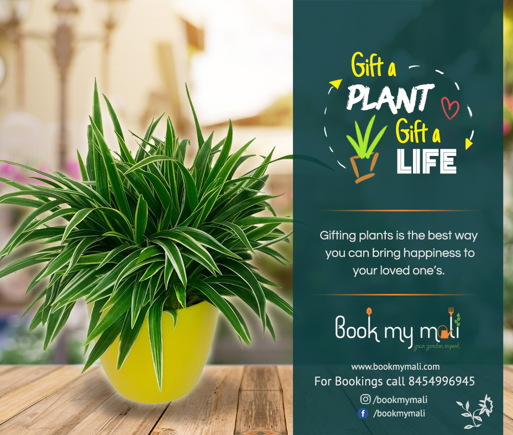 GIFT A PLANT  - GIFT A LIFE